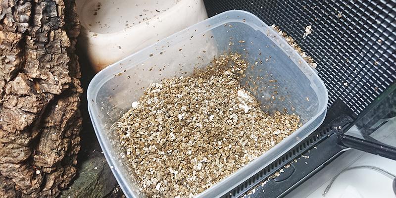 【ガーゴイルゲッコーの飼育用品】産卵床の種類と選び方