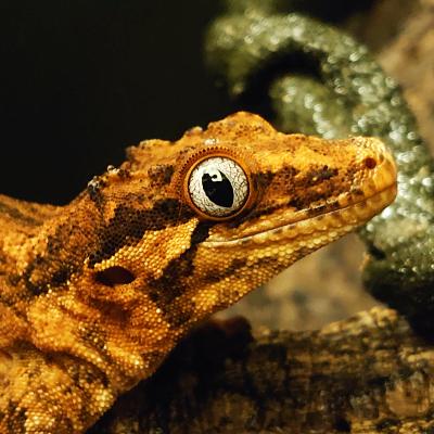 【GeckoLife】2020年振り返り