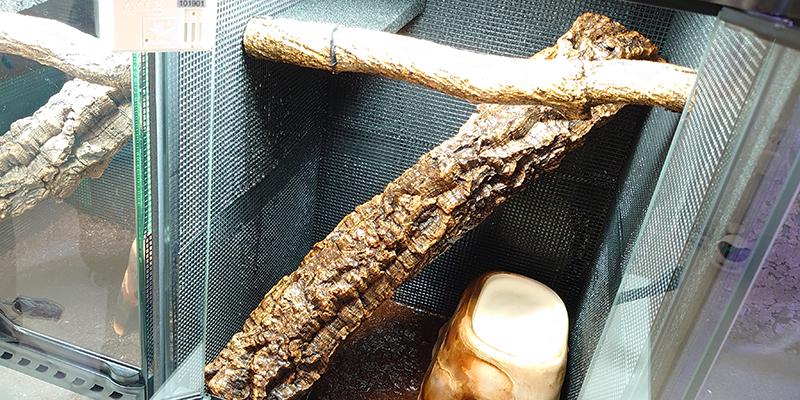 【ガーゴイルゲッコーの飼育用品】GeckoLife オススメレイアウト
